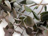 Umelý eukalyptus na aranžovanie