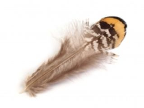 Bažantie perie dĺžka 4,5-8,5 cm