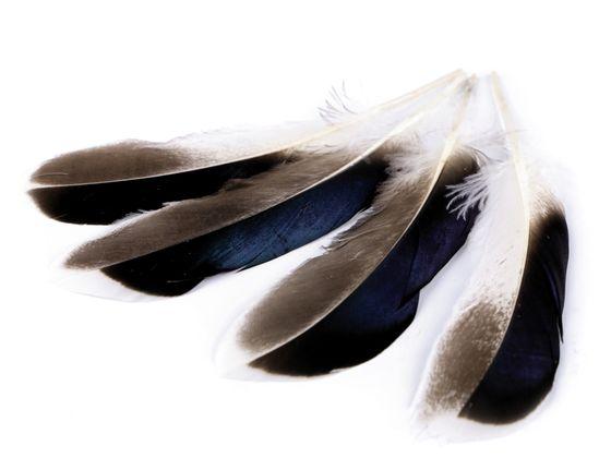 Kačacie perie dĺžka 10-14 cm